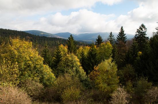 Galeria Międzygórze - Igliczna - szlakiem czerwonym