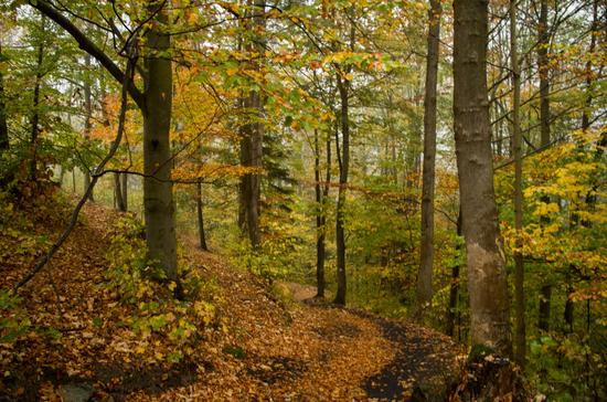 Galerie Międzygórze - Igliczna - szlakiem zielonym